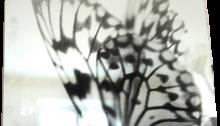 DOURENN A. Miroitique, Série Psyché, Papillon, 35x48cm