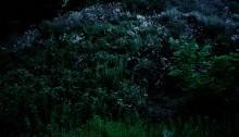 """E. HURTADO, série """"À quoi rêvent les fleurs"""", argentique couleur, /alu. 80x120cm 5 ex., 2006"""