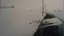 P. WÜTHRICH, Oiseau/neige