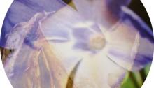 de SOUSA Aurore, ELLMSP n°3, Madame de Warrens verre feuilleté, ø29cm. Tir.1/3 2013