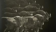 SEYEDIN Marjan, Rhinocéros Aquatinte n°7/21, BFK Rives, 49x69cm, 2012