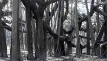 DUBOIS-DAUPHIN Natacha, Sans titre, tirage numérique unique sur alu Dibond, 72x108cm, 2011