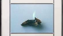 GENIN Cendrine, Nunc Stans n°34, Photo sur verre 24x36cm. En vitrail 38,5x50cm. 2017