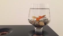 Verre aquarium ! Ø7cm H15cm